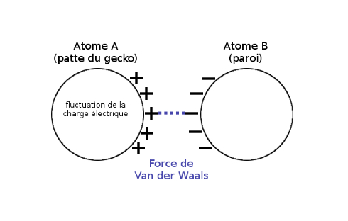 Force de Van der Waals