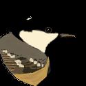 Mésange noire face